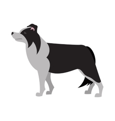 Border collie design vector