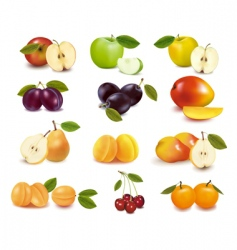Group with fruits vector