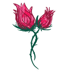 two red rose or color vector image