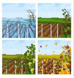 Vineyard different season set collection vector