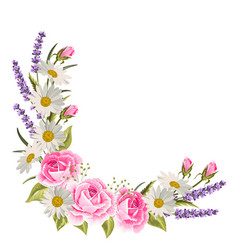beautiful pink roses and lavender flowers on white vector image