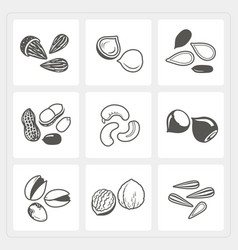 Nut icons set vector