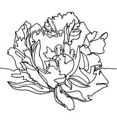 Peony flower close-up minimalist vector
