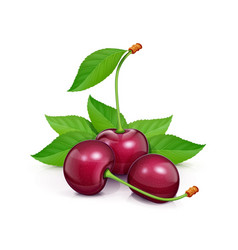 three cherries with green vector image