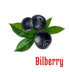 Blue bilberry fruit with green leaves cartoon icon vector image vector image