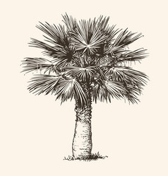 palm tree realistic drawing hand drawn sketch vector image
