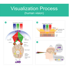 visualization process human vision vector image vector image