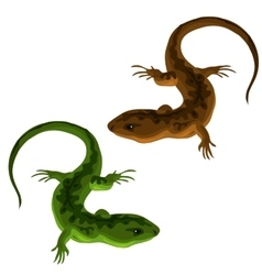 Green and brown lizards on a white background vector image vector image