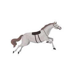 Grey thoroughbred horse equestrian professional vector