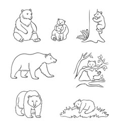 Brown bears in contours vector
