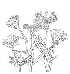 Drawing cornflowers and chamomiles vector