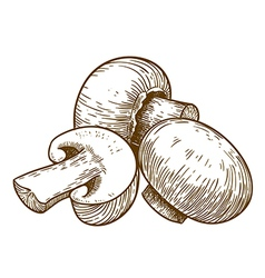 engraving tree champignons vector image