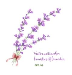 Watercolor branch of lavender vector