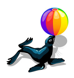 circus animal sea lion with colorful ball isolated vector image
