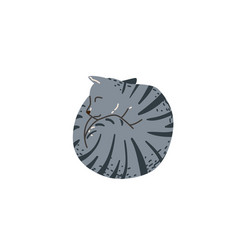 Grey color tabby funny cat sleeping curled up look vector