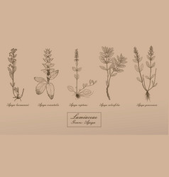 hand drawn collection of herbs vector image