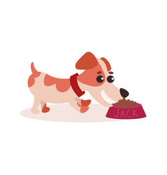 Jack russell terrier character eating dog food out vector