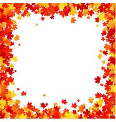 maple leaves square border frame on white vector image