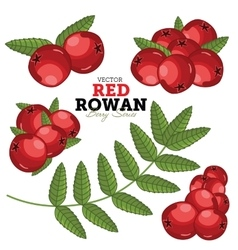 Rowan Set vector