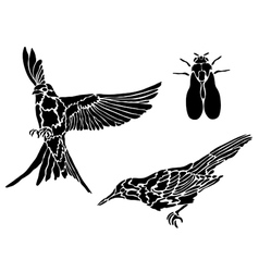 Collection of tattoos of birds vector image vector image