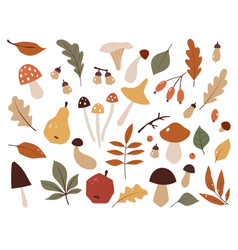 autumn set hand drawn elements botanical leaves vector image