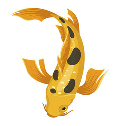 Coy fish icon japanese asian yellow carp vector