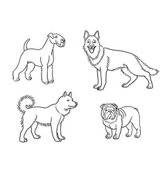 dogs different breeds in outlines set1 vector image