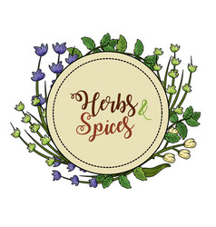 Emblem herbs and spices plants and organ food vector