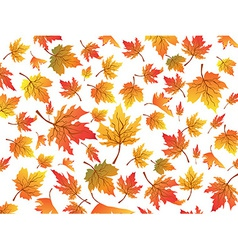 maples seamless background vector image