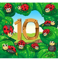 Number 10 with 10 ladybugs on leaves vector