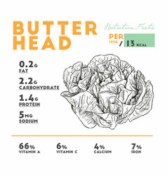 Nutrition facts of raw butterhead lettuce vector