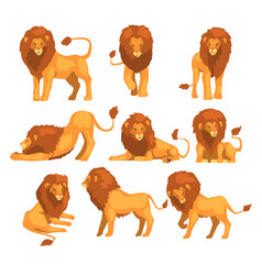 Proud powerful lion character in different actions vector