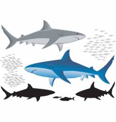 Sharks and fish isolated images vector