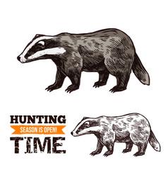 Sketch badger wild animal vector