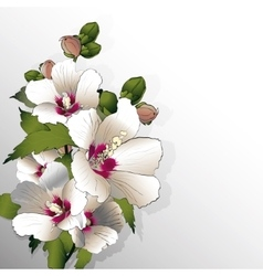 White mallow flowers vector