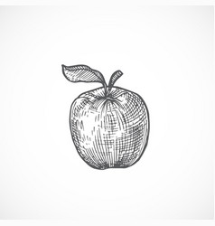 apple with leaf hand drawn vector image
