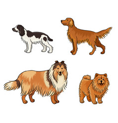 dogs different breeds in color set4 vector image