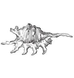 Hand drawing seashell-5 vector