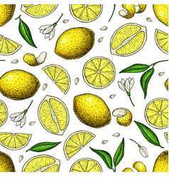 lemon seamless pattern drawing summer vector image