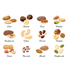 Nuts and seeds almond and pistachio acorn vector