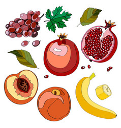 set grapes grapes grapes vector image