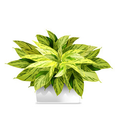 Spotted plant in a white pot element home vector