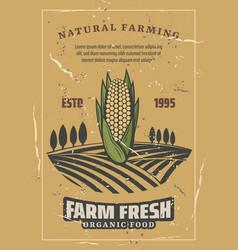 corn vegetable harvest retro vector image