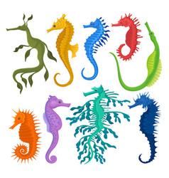 Flat set different species seahorses vector