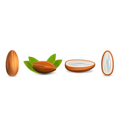 almond icon set realistic style vector image