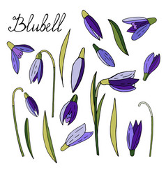 set of isolated elements of spring flowers vector image