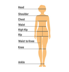 woman size chart human front side silhouette vector image