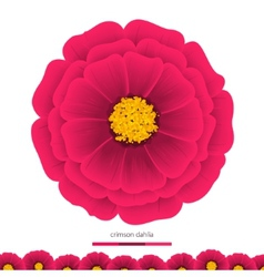 Beautiful flowers Dahlias Element for design vector