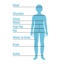 Boy size chart human front side silhouette vector