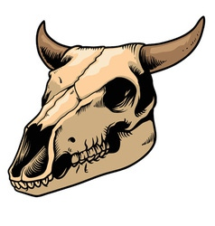 cow skull vector image